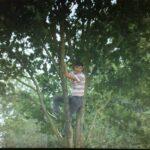 Man climbs tree to watch Stoke-Man City