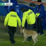 Liga MX match invaded by dog and cat, making it the greatest match of all time