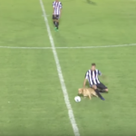 Doggy pitch invader sent off for vicious tackle in Argentine third-division match